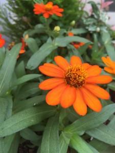 オレンジの花1つ