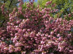 フランスの花
