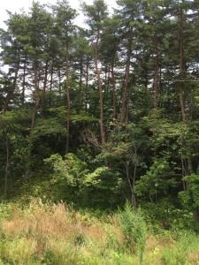 飯縄の森1